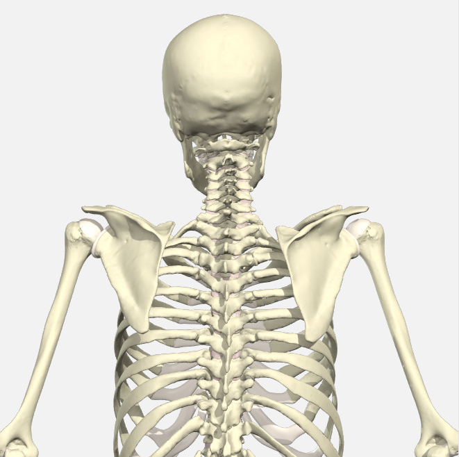 How upper back and shoulder posture influence each other and cause ...